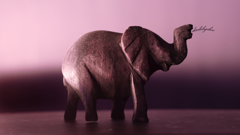 dadilydoo08-elephant